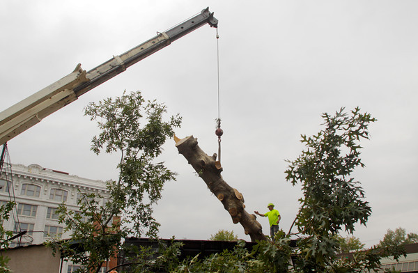 Gabriel Morales, of Grasshoppers Landscaping & Tree Service, helps guide an oak tree into the back of a truck while working on the future site of the New Albany Bicentennial Park at the corner of Spring and Pearl streets on Wednesday afternoon. A total of nine trees are slated to be removed from the site after specialists found them to be unhealthy. Staff photo by Christopher Fryer
