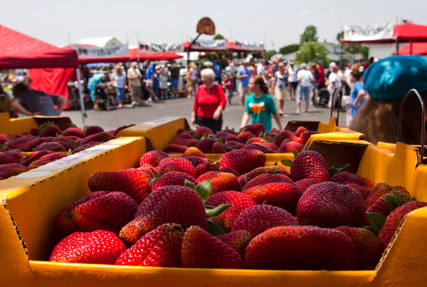 Flats of strawberries sit behind the stemming tent at the 34th annual Starlight Strawberry Festival at St. John's Church on Saturday afternoon. Staff photo by Christopher Fryer