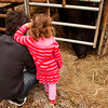 Damon Sisk and his daughter Natalia, both of Charlestown, look on as an angus bull eats hay during the inaugural Community Farm Day at Konkle Farms in Greenville on Saturday morning. The event was created to give the community an opportunity to learn about different agricultural practices and how they affect their daily lives. Staff photo by Christopher Fryer