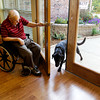 Roy Reynolds opens the door for Jack, a black labrador, in the Villas of Guerin Woods assisted living and skilled nursing facility in Georgetown on Thursday morning. Jack is one of two dogs now living in the facility that were adopted in September to help provide companionship for the residents. Both dogs were trained through a program at the Luther Luckett Correctional Facility in Oldham County, Ky. Staff photo by Christopher Fryer