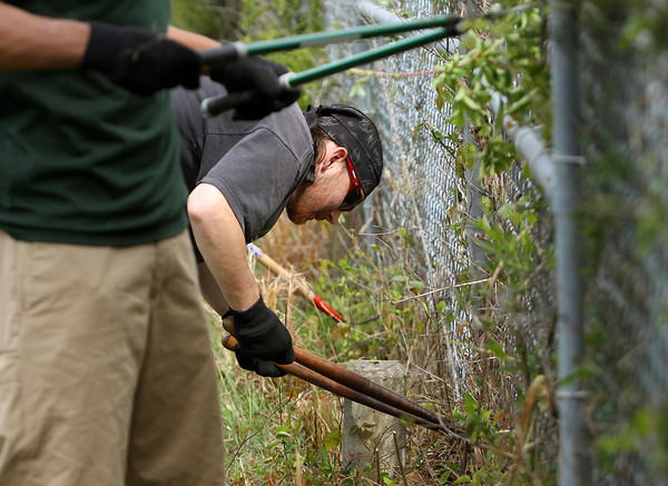 Ivy Tech Community College Southern Indiana on Friday celebrated achieving Tree Campus USA status with students, faculty and staff volunteering their time to plant trees, remove debris from trail ways and picking up trash from the neighboring interstate right-of-way. Ivy Tech student David Schwartz. above, joined a team cleaning weeds off a fence row. Staff photo by C.E. Branham