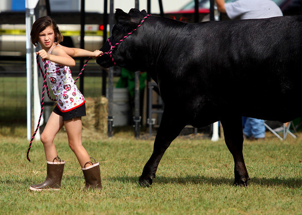 Nine-year-old Olivia Combs walks her 1,000 pound Simmental heifer Buttercup around the barn area of the Clark county 4-H Fairgrounds Monday morning. This is Combs first year showing in the 4-H Fair. Staff photo by C.E. Branham