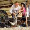 Hailey Evans, 12, left, and her sister Olivia McKinley, 5, both of New Albany, play with Lucy Goosey, Isabella Mattingly's two-month-old African goose, during the Poultry Show in the Small Animal Barn at the Floyd County 4-H Fair on Tuesday afternoon in New Albany. Staff photo by Christopher Fryer