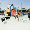 Dogs and their owners splash around in the kid pool during the seventh annual Pooch Plunge at the Jeffersonville Aquatic Center on Saturday afternoon. This event, along with the children's goldfish run earlier in the day, were the final activities at the center for the season. Staff photo by Christopher Fryer