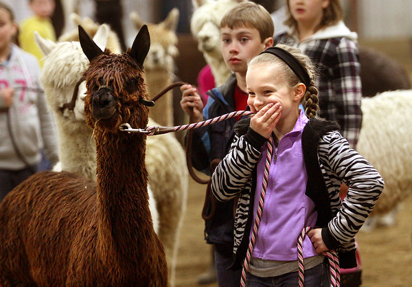 Samantha Rasor giggles due to her llama Jimmy Boy snorting loudly during a instructional workshop Saturday at the Clark County 4H Fairgrounds. The Clark County Luv-a-lot Lama Club held a llama workshop and show in conjunction with the Indiana Fiber and Music Festival. Staff photo by C.E. Branham