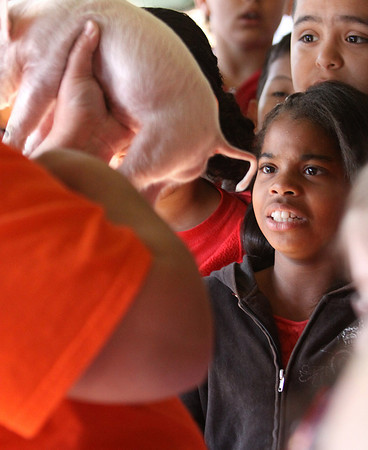 Northaven Elementary School student Dezyrae Wallace gets a close look at a piglets tail during Ag Day Tuesday at the Clark County 4-H Fairgrounds. Staff photo by C.E. Branham