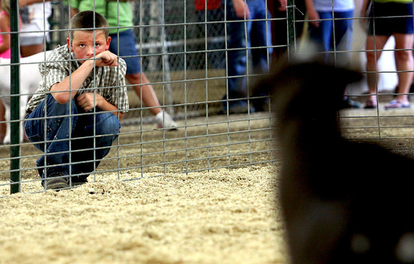 Bo Giltner studies participants showing goats Wednesday morning during the Clark County 4-H Fair Market Wether Goat Show. Giltner, who was about to show a goat for the first time, wanted to see how it's done. Staff photo by C.E. Branham