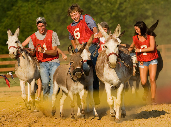 From left, Danny Laird, 18, of Greenville, Parker Hale, 17, of Palmyra, and Micki Dye, 17, of Franklin, Tenn., attempt to stay on their donkeys as they participate in the Donkey Races at the Floyd County 4-H Fair in New Albany on Wednesday evening. Staff photo by Christopher Fryer