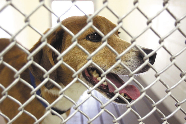 The J.B. Ogle Animal Shelter has more than 20 animals housed that were rescued from the areas hit by the March, 2 tornadoes.  Staff photo by C.E. Branham