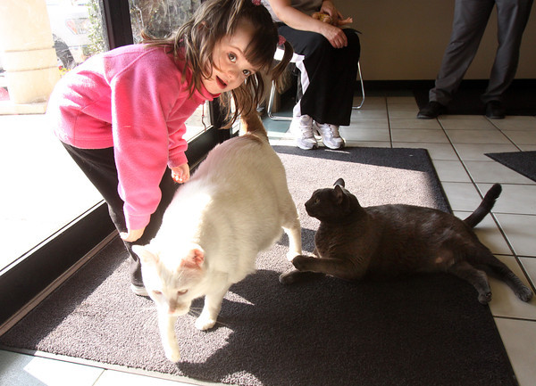 Three-year-old Angel Casto checks out Bandit, a 36 pound cat her parents Robin and Alan Casto adopted from the J.B. Ogle Animal Shelter on Thursday. They also adopted Smoky who weighs close to 30 pounds. Staff photo by C.E. Branham
