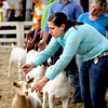 Megan Brooks, foreground straightening her goat's head, won first place in senior showmanship  Wednesday morning in the Clark County 4-H Fair Market Wether Goat Show. Staff photo by C.E. Branham