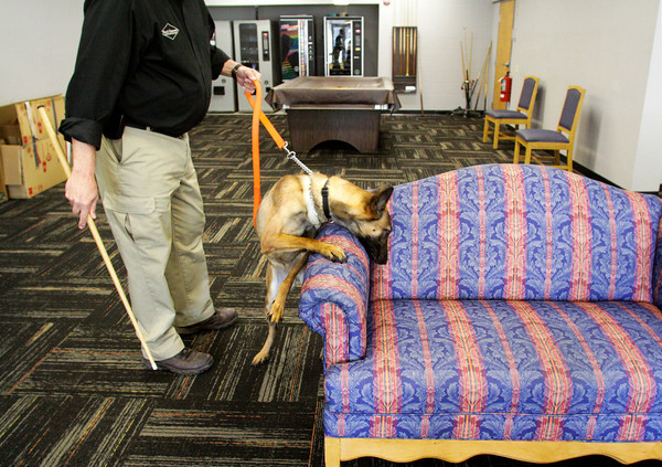Trainer and handler Skip Cissna, of Black Diamond Termite and Pest Control, and Mia, a two-year-old Belgian malinois bed bug detector dog, search furniture in a common area at Riverview Towers in New Albany on Thursday afternoon. Staff photo by Christopher Fryer