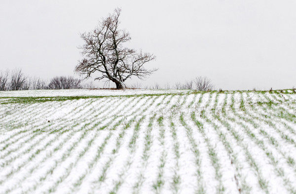 Snow covers a field along Ind. 62 on Wednesday afternoon in Clark County. Wednesday's snowfall had a mild impact on the area, but other regions were hit hard as a blizzard moved across the state. Staff photo by Christopher Fryer
