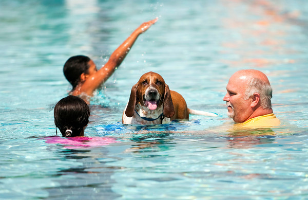 Howie the basset hound stands on a boogie board while swimming with Bryan Wallace and his grandchildren, May and Vance Akers, all of Jeffersonville, in the main pool during the seventh annual Pooch Plunge at the Jeffersonville Aquatic Center on Saturday afternoon. This event, along with the children's goldfish run earlier in the day, were the final activities at the center for the season. Staff photo by Christopher Fryer
