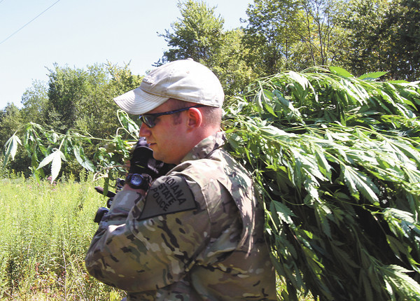 Indiana State Police Trooper Nathan Abbott carries a bundle of marijuana plants out of a Scott County cornfield Tuesday morning. The marijuana eradication team from the Sellersburg Post raided several fields Tuesday. Staff photo by C.E. Branham