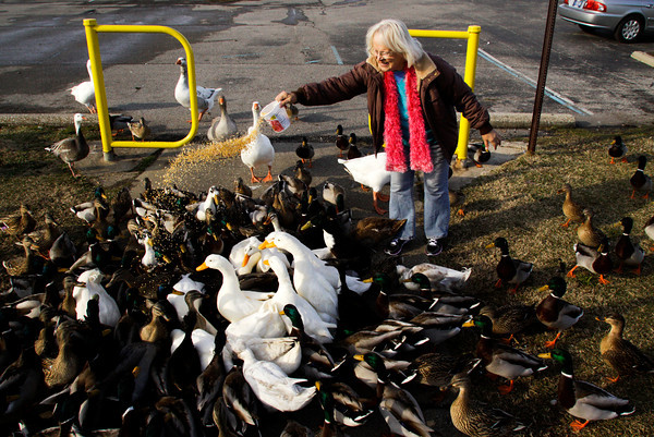 "Janine Harrington, of New Albany, feeds cracked corn to ducks and geese at Sam Peden Community Park in New Albany on Wednesday afternoon. She has been feeding the water fowl for about seven years and comes out almost every day during cold weather cold so they have something to eat. ""Listen to that music,"" Harrington said as dozens of quacks filled the air while she fed them. ""Isn't that a great sound? I love it, I love it."" Staff photo by Christopher Fryer"