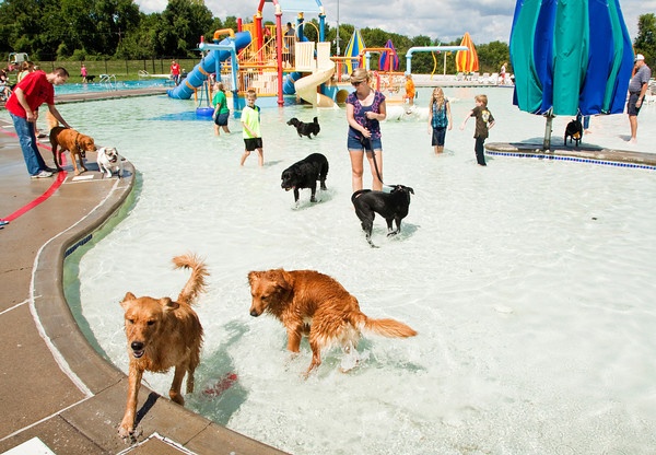 Golden retrievers Merlin, left, and Sabbi horse around in the water during the Pooch Plunge at the Aquatic Center in Jeffersonville on Saturday afternoon. Staff photo by Christopher Fryer