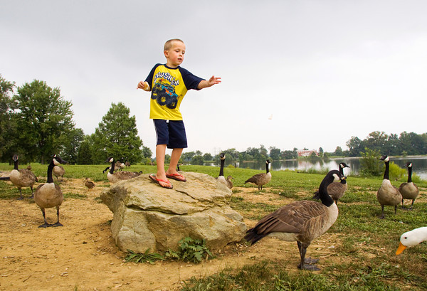 Gavin Browning, 5, Memphis, stands on a rock while he feeds ducks and geese next to the lake at Sam Peden Community Park in New Albany on Wednesday afternoon. Staff photo by Christopher Fryer