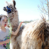 7-year-old Olivia McKinley, New Albany, spends time with her llama at the Purdue Extension's Spring Festival Saturday morning.<br /> Staff photo by Tyler Stewart