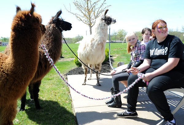 Right to Left: Floyd County 4-H members Abigail Kreutner, Kendall Lanham and Hannah Bailey sit with their two llamas and alpaca at the Purdue Extension's Spring Festival Saturday afternoon in New Albany. The 4-H brought a seven llamas and one alpaca, to educate kids for the YMCA's Healthy Kid Day.<br /> Staff photo by Tyler Stewart