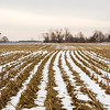 Snow covers the ground between the remnants of corn stalks in a field between Stacy and Bethany roads near Charlestown on Friday morning. Staff photo by Christopher Fryer