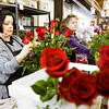 Seasonal employees Mary Applegate, left, and Debbie Scott, both of New Albany, work on rose arrangements at Aebersold Florist along Silver Street in New Albany on Thursday afternoon. Valentine's Day is the busiest time of year for the florist, and they expect to have more than 500 deliveries on Friday. Staff photo by Christopher Fryer
