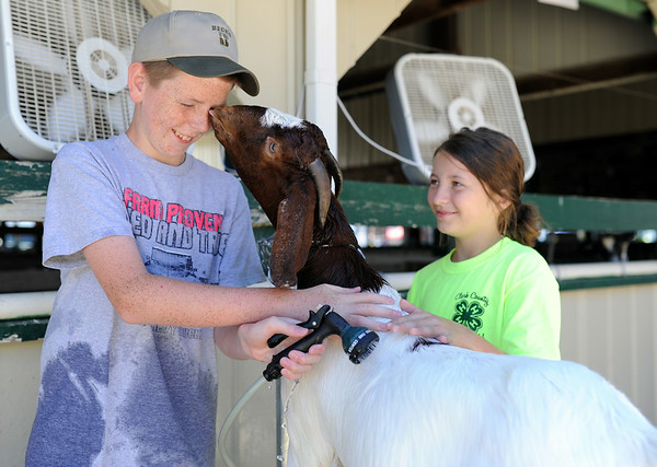 Jack Giltner, 12, receives some affection from while rinsing off Riley Bibb's, 10, boar goat near the stables of the Clark County 4-H fairgrounds Tuesday morning. Bibb houses her goat and a few other animals on the Giltner's farm in Marysville. This will be Bibb's first year showing in the 4-H Female Goat Show Thursday morning.<br /> Staff photo by Tyler Stewart