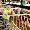 Calvin Mullins watches passers-by in the stables while spending time with his swine, Clark, Thursday morning at the Clark County 4-H fairgrounds. In his first year showing at the 4-H, Mullins was required to wear a protective vest while showing his swine as a precaution from his two surgeries in June.<br /> Staff photo by Tyler Stewart