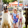 Amber Simpson, 8, New Albany, walks the llamas Spotlight, left, and Able around the fairgrounds during the Floyd County 4-H Fair in New Albany on Wednesday afternoon. Staff photo by Christopher Fryer