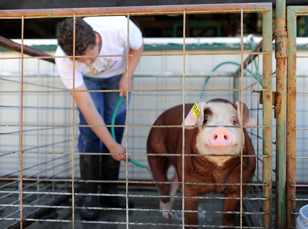 Matthew Branstetter, 14, Charlestown, hoses down one of his two swine, Johnny Godwin, after scrubbing and brushing him in preparation for the 5 p.m. Swine Show at the Clark County 4-H fairgrounds Tuesday morning. With the completion of Branstetter's second year showing, he plans to auction his highest placing swine in the competition. <br /> Staff photo by Tyler Stewart