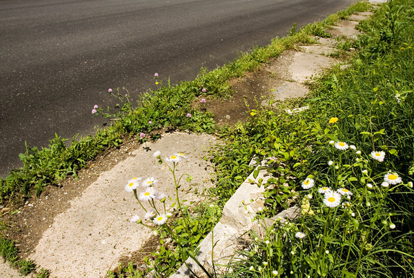 Wild flowers and weed filled sidewalk cracks are pictured along a section of East 18th Street between Dewey and Troy streets in New Albany on Monday. New Albany Street Commissioner Mickey Thompson plans to investigate the roadway conditions of the area after a resident reported the poor condition of the sidewalks along the block. Staff photo by Christopher Fryer