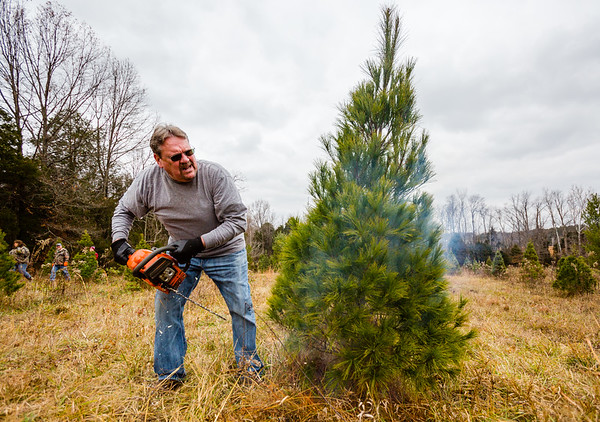 Smoke bellows and sawdust flies as Bill Strohbeck pulls away from his timbering pine at Meyer Christmas Trees on Saturday. Staff Photo By Josh Hicks
