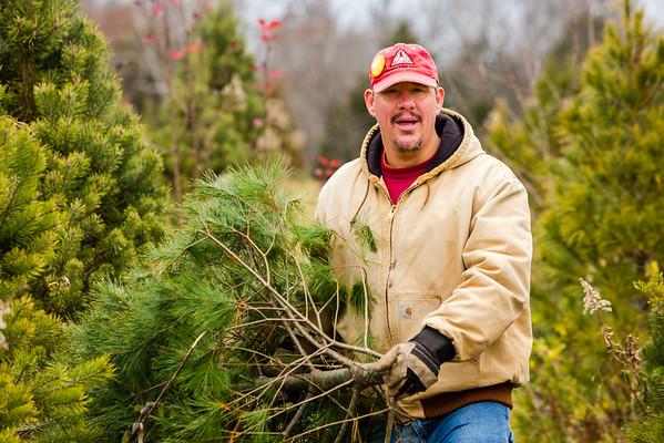 Adam Sandifer hauls off the tree his mother, Mary Sandifer, freshly cut down at Meyer Christmas Trees on Saturday. Staff Photo By Josh Hicks
