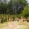 The Pryor Family hunts through many rows of trees before finding the perfect pine for their household at Meyer Christmas Trees on Saturday. Staff Photo By Josh