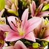 Asiatic lilies are pictured in a work space at Aebersold Florist in New Albany as employees work to fill Valentine's Day orders Friday morning. Staff photo by Christopher Fryer