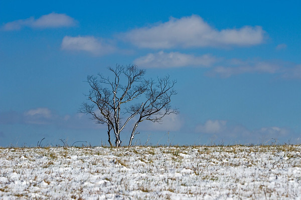 A snow-covered tree is pictured near River Ridge in Jeffersonville on Tuesday afternoon. Staff photo by Christopher Fryer