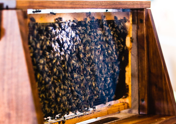 Observation hives make it easy to monitor the production and health of bees. Staff Photo By Josh Hicks