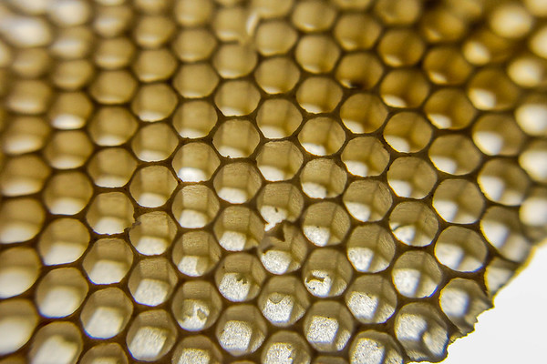 An empty section of honeycomb is held up to a light to inspect its geometry at Pearls on Pearl in New Albany. Staff Photo By Josh Hicks