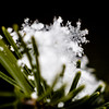 Emerging from a handful of snow, a damaged snowflake melts in the afternoon sun. Staff Photo By Josh Hicks