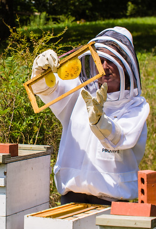 Teri Mason holds up a frame of fresh beeswax to the sun to show its bright color before it gets covered with bees and honey.
