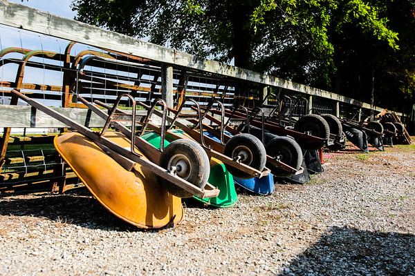 A row of wheelbarrows relax against a fence before the opening of the Clark County Fair.