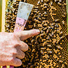 Randy Lynch barehandedly holds up a frame of bees from a hive and points to a queen bee. Queens are longer than normal bees.