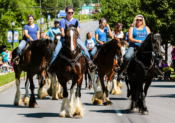 Horse lesson, boarding and training provider Cedar Creek Drafts move down Market Street during the Charlestown Founder's Day parade.
