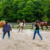 From left, Katie Koehler, 16, Corinne Royal, 16, and Ryan Yochum, 17, encourage their horses to run around a pen using lead ropes during the Floyd County Fair on Thursday. Staff Photo By Josh Hicks