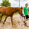 Ryan Yochum, 17, leads his quartermaster horse Pistol around a horse pen during the Floyd County Fair on Thursday. Staff Photo By Josh Hicks