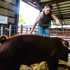 Lily Korte, 15, brushes a pig in the swine barn during the Floyd County Fair on Thursday. Staff Photo By Josh Hicks