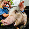 Porkchop attempts an escape from a cleaning pen during the Floyd County Fair on Thursday. Staff Photo By Josh Hicks