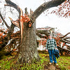 Last night's storms split apart an large, old tree in John Allen's front yard in Bennettsville. Allen says he grew up in the house pictured behind the tree, highlighting that his great aunt used to climb the tree to see who was arriving at the train station. Staff Photo By Josh Hicks