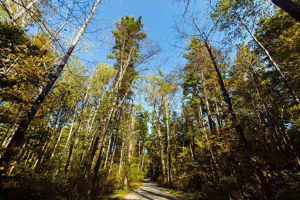 "Roads wind through Clark State Forest, connecting visitors to camping locations, fishing spots, hunting areas, a shooting range, and picnicking plots. ""Clark State Forest, established in 1903, is the oldest state forest in Indiana,"" according to IN.gov."