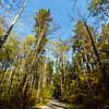 """Roads wind through Clark State Forest, connecting visitors to camping locations, fishing spots, hunting areas, a shooting range, and picnicking plots. """"Clark State Forest, established in 1903, is the oldest state forest in Indiana,"""" according to IN.gov."""